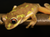 Frogs Of Durban