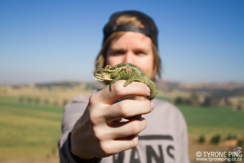 Bradypodium thamnobates   Natal Midlands Dwarf Chameleon   Tyrone Ping